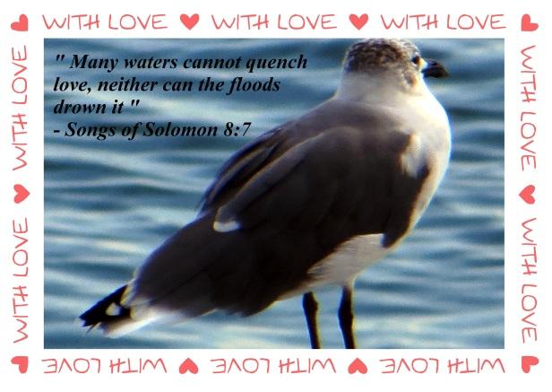 © Photo Artist Susan Ruth Robertson 090025006100 004 - Copy (2).JPG