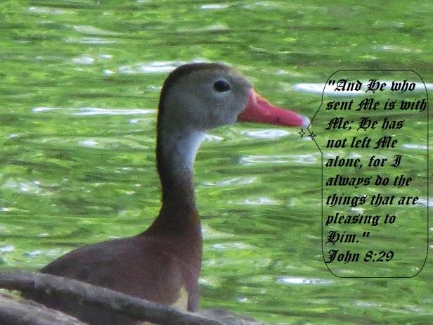 © Photo Artist Susan Ruth Robertson 090025006100 108 - Copy (3).JPG
