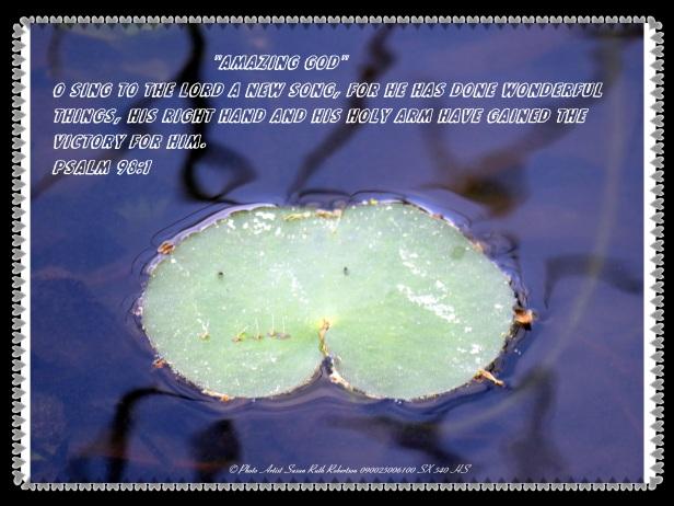 © Photo Artist Susan Ruth Robertson 090025006100 SX 540 HS 020 - Copy - Copy.JPG