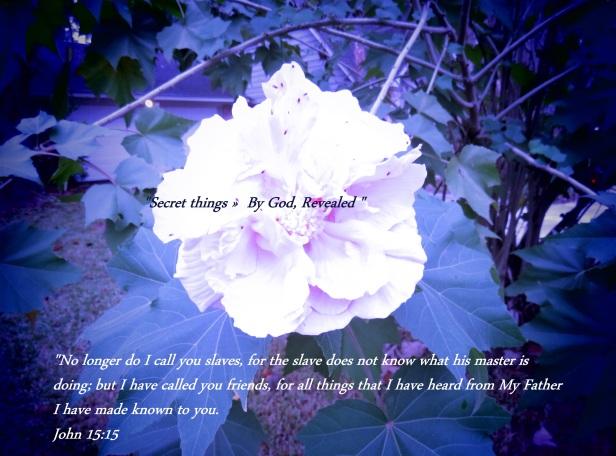 © Photo Artist Susan Ruth Robertson 090025006100 SX 540HS (8) - Copy.JPG